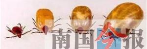 <b>一只小小的蜱虫携带上百种病原 被咬后可能致死</b>