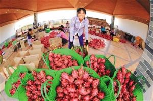 以特色优势构建农业体系 用产业支撑推动乡村振兴