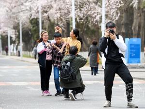 吉林大学南岭杏花节开幕 汉服飘飘花满园(组图)