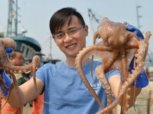 山东青岛进入八带捕捞旺季 每天捕捞数万斤!(图)