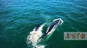 4月27日焦点图:北海拟划定保护区打造鲸鱼之乡