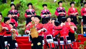 【高清组图】广西龙胜:古树茶文化引游人