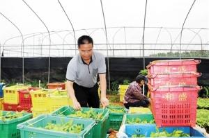 上林县:致富带头人 致富不忘家乡人
