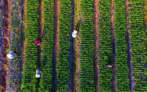 重庆铜梁:果苗产业助力乡村振兴