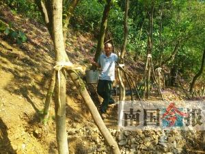 年近七旬老人每天到后山护树种花 想把危岩变花园