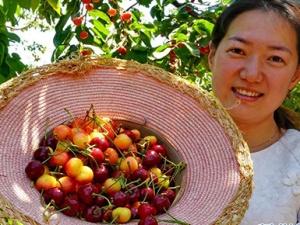 秦皇岛万亩樱桃助农增收