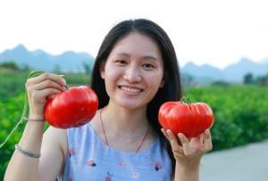高清组图:柳城贫困村群众种植西红柿助脱贫