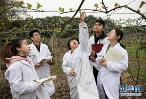 探访国家猕猴桃种质资源圃