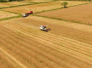 德清:金色田野 小麦丰收