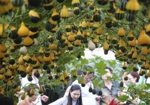 中国(广西)―东盟蔬菜新品种博览会在南宁举行