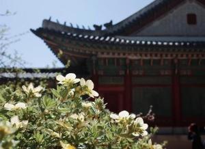 世界园林巡礼――韩国昌德宫