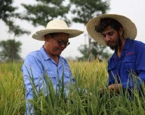 达则兼济天下――记在巴基斯坦教授杂交水稻技术的中国专家