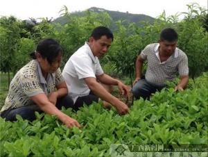 廖开强:带领群众脱贫致富的好党员