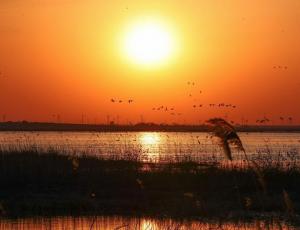 辽宁康平:卧龙湖湿地迎来大批候鸟
