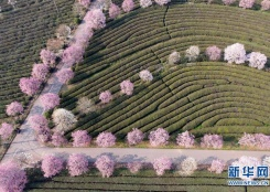 江西南昌:春游凤凰沟
