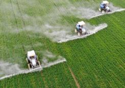 安徽颍上:小麦春管助丰收