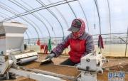 吉林:水稻育秧备耕忙
