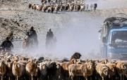 新疆福海县牧民迎来春季转场
