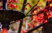 深秋的澳大利亚蓝山地区