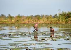 安徽颍上:特色种植助力乡村振兴