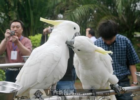 网络媒体记者一行参观海南热带飞禽世界