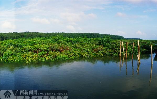 自然景观 中国的红树种类有37种