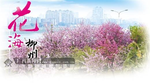 高清 花海柳州 一座工业城市的浪漫生态