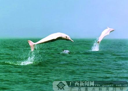 钦州:独特优美的南国滨海风光