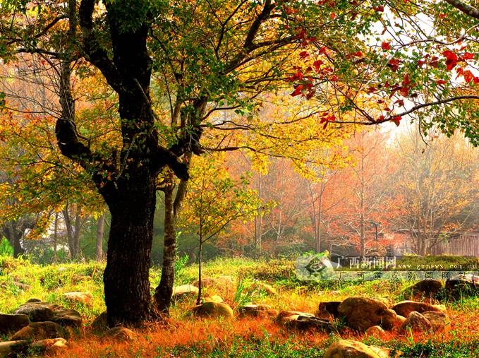 中国氧都十万大山森林公园美得令人室息(9/10)图片