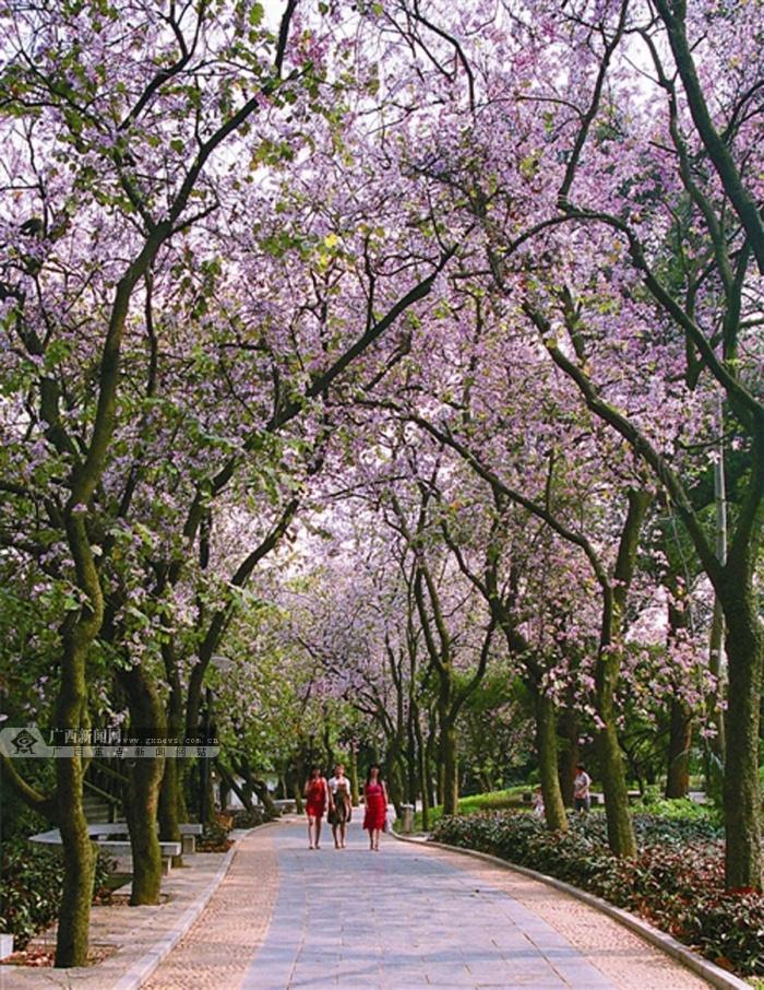 中国十大美丽城市,国家森林城市,国家卫生城……柳州追求绿色发展的