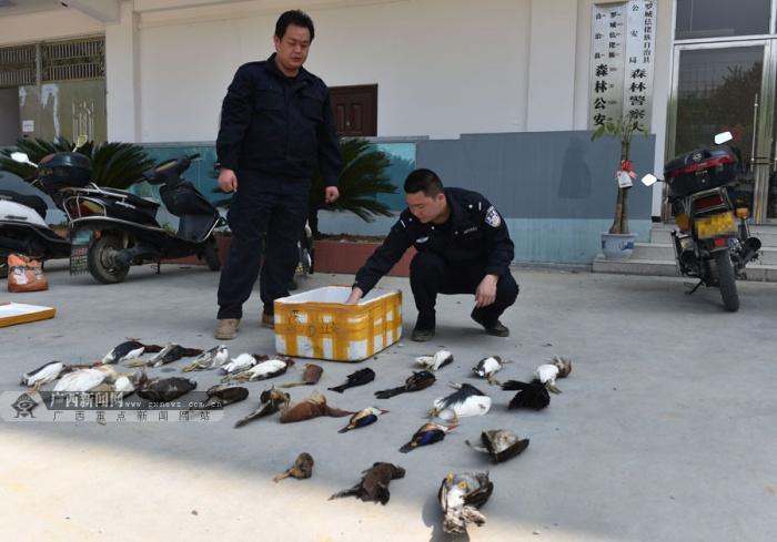 罗城破非法猎捕候鸟案 收缴盗猎所得候鸟43只(图)