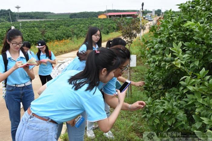 广西民大大学生通讯社调研吴圩镇发展新模式