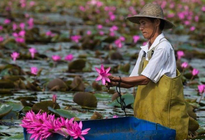 海南热带花卉