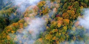 近万游客雨中游光雾山赏秋景
