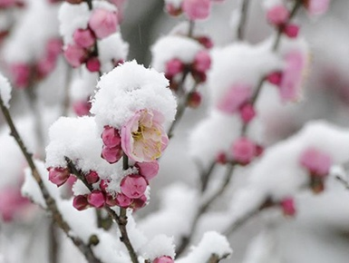 我国中东部地区 多地降雪