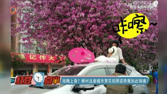 戏精上身?柳州这座城市赏花拍照姿势竟如此销魂!