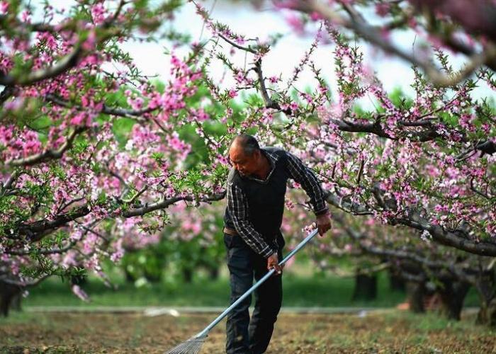 谷雨时节农事忙
