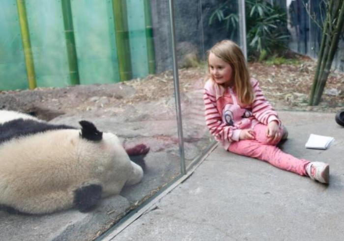 旅加大熊猫一家迁居卡尔加里后首度公开亮相