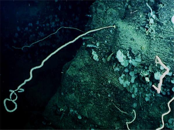 南海首次发现冷水珊瑚群