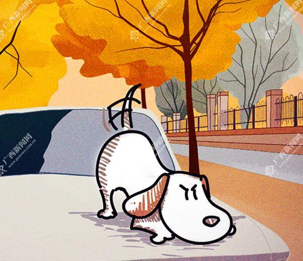 【新桂漫画】遛狗不牵绳,后果很严重