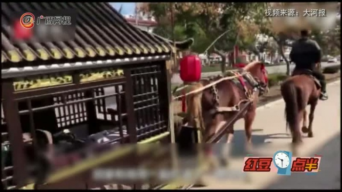 兄弟俩驾马车帮80岁父亲圆梦