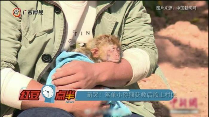 萌哭!落单小猕猴获救后赖上村民