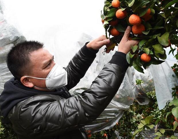 与疫情抗争 与春光同行——广西农村春耕备耕一线观察
