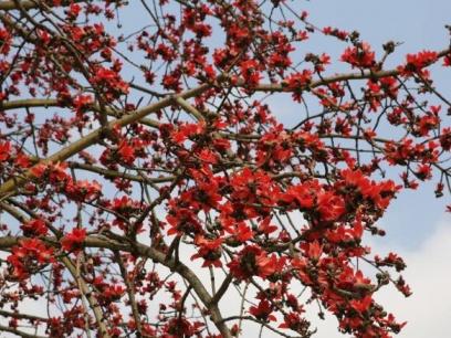 惊艳!南宁南湖公园内英雄花盛开,树下的造型美呆