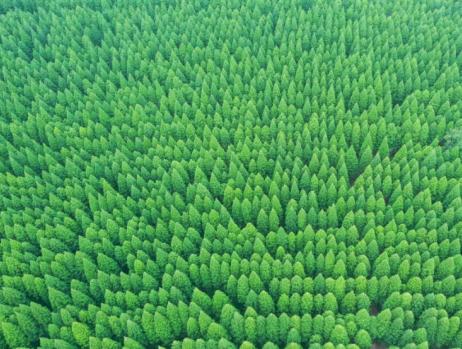 江苏东台:盐碱滩涂变身森林公园