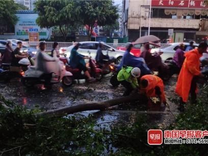 南宁强风雨刮倒多棵树!相关部门人员紧急处理