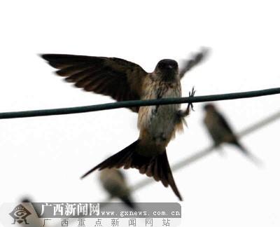 壁纸 动物 昆虫 鸟 鸟类 雀 桌面 400_324