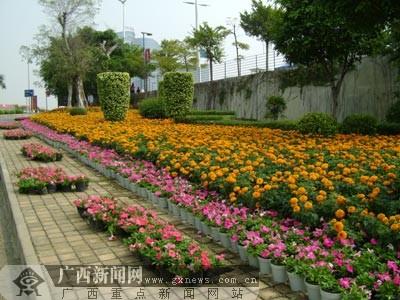 花卉博览展示-鲜花舞动的南宁国际会展中心