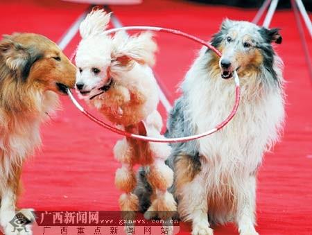 马戏团 动物杂技