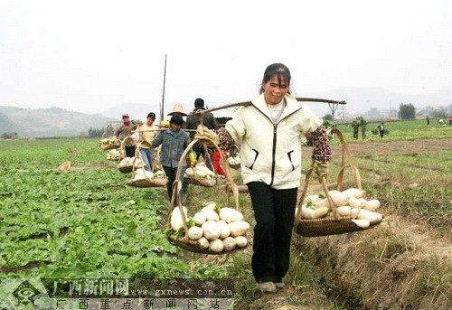 象州县妙皇乡:引导返乡农民工创建高效农业示范园